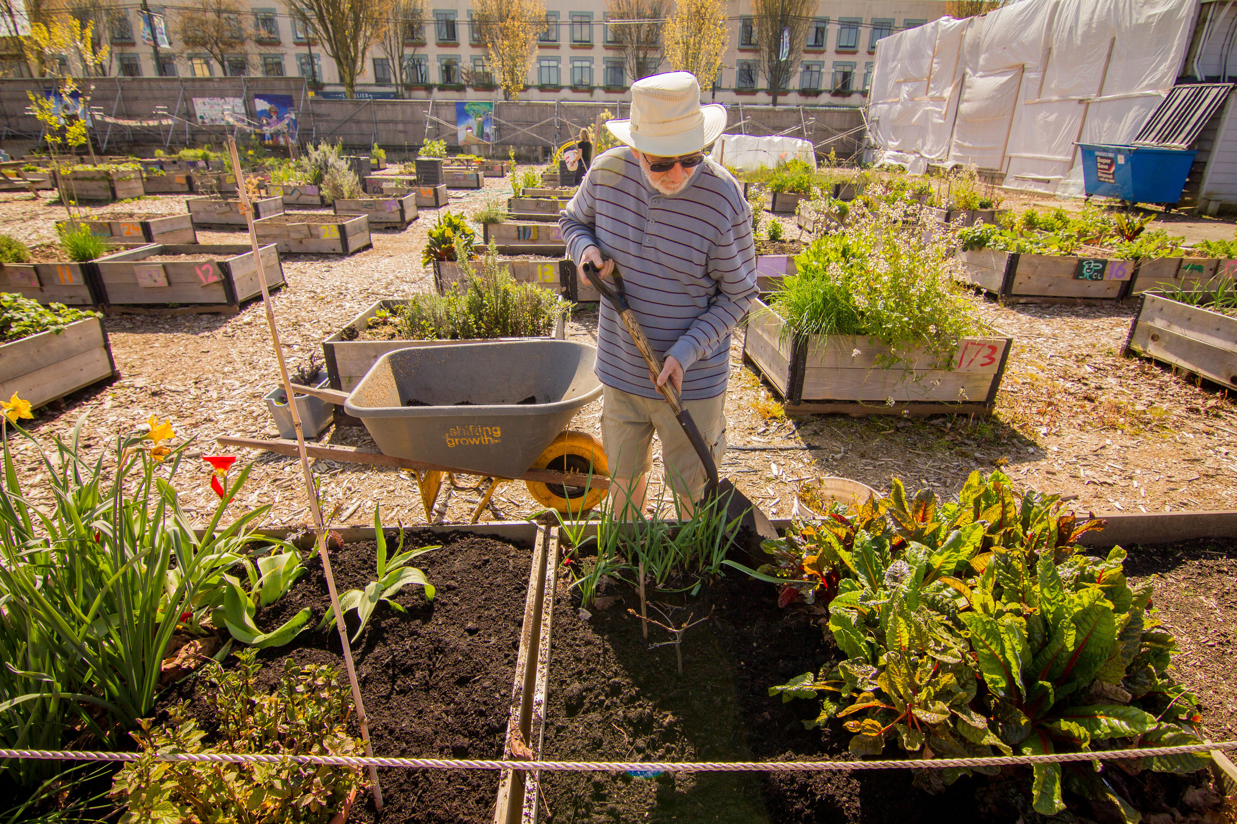 Raised_Garden_Bed_Hastings_North_Temporary_Community_Garden_04.2016_Shifting_Growth_81.jpg