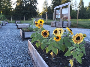 burke_mountain_community_garden.jpeg