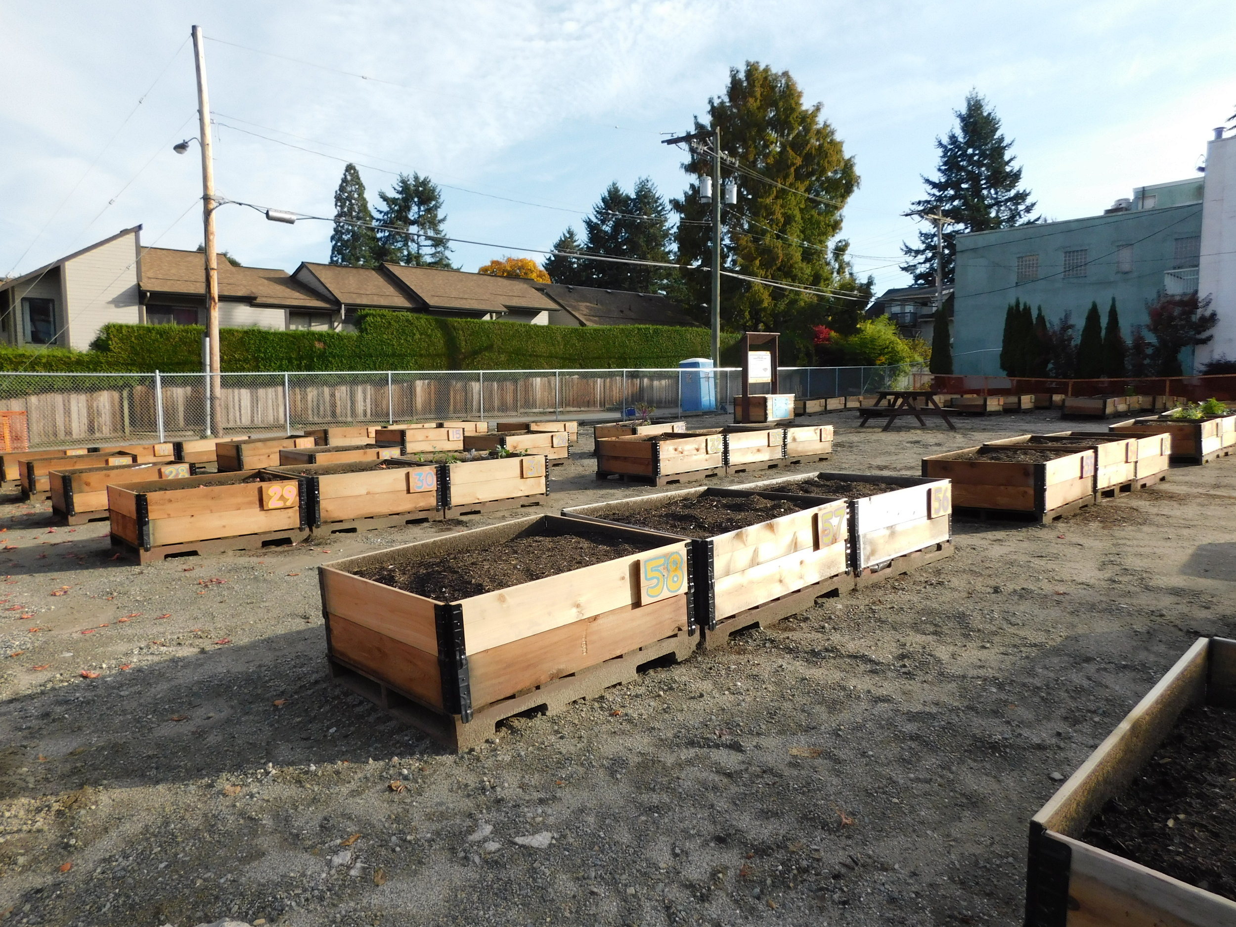 Cambie_16th_Vancouver_Community_Garden_Builders-0011.JPG