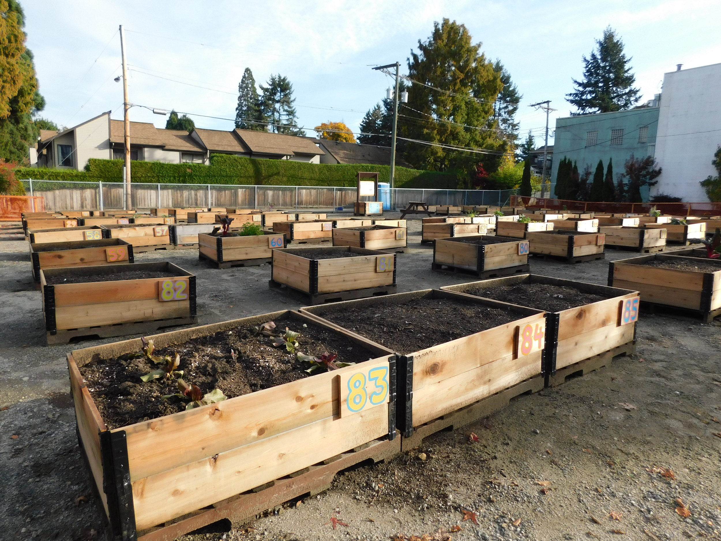 Cambie_16th_Vancouver_Community_Garden_Builders-0012.JPG