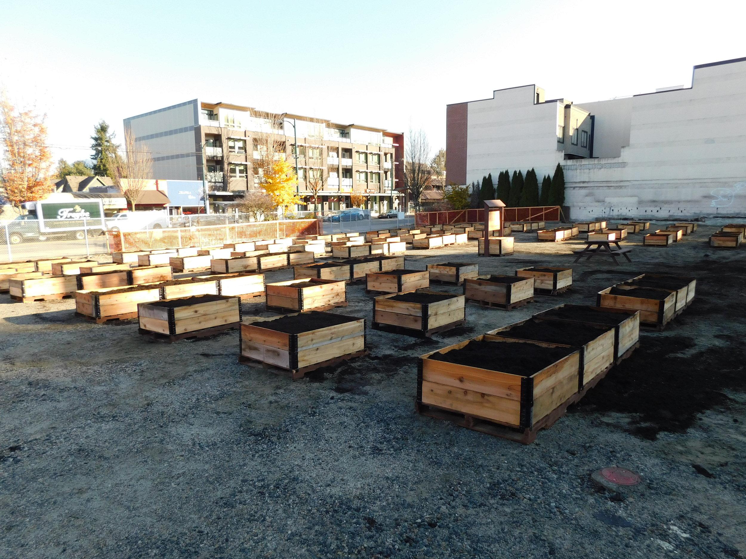 Broadway_Alma_Vancouver_Community_Garden_Builders-0002.JPG