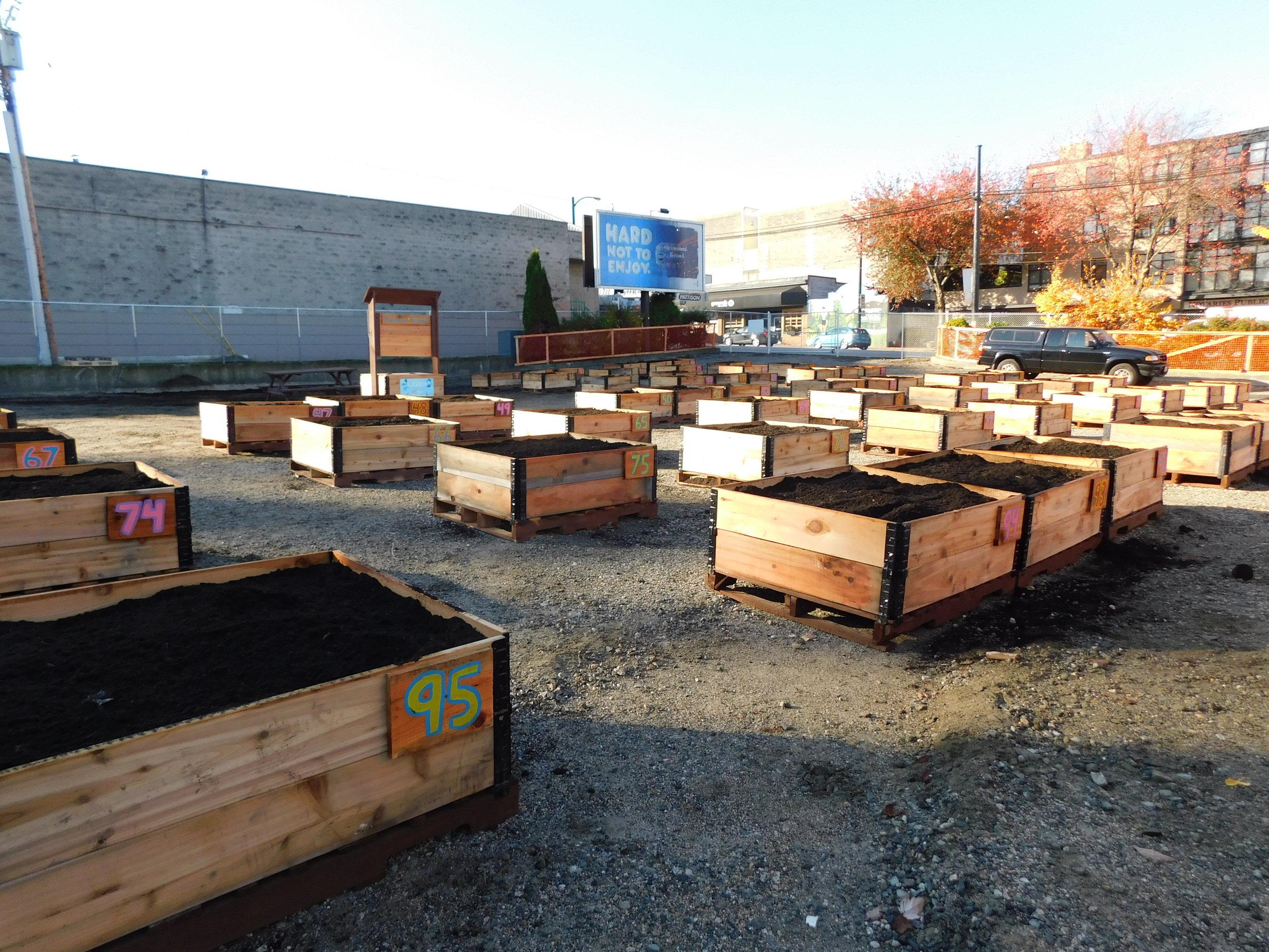 Broadway_Alma_Vancouver_Community_Garden_Builders-0009.JPG