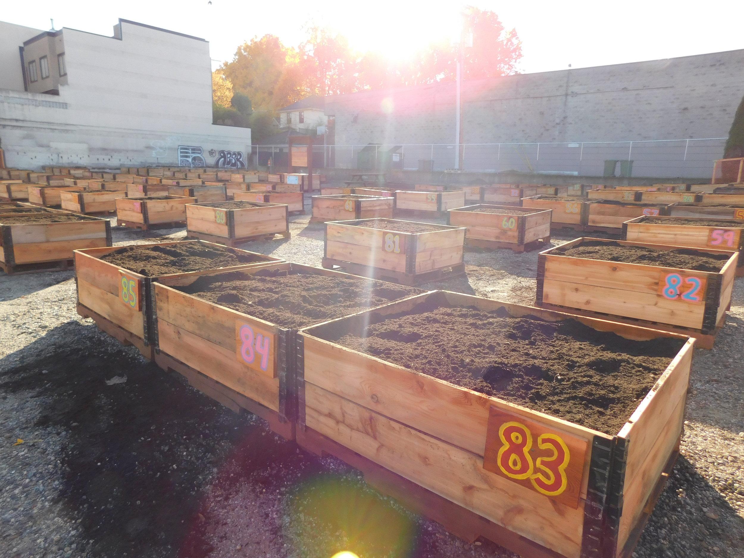 Broadway_Alma_Vancouver_Community_Garden_Builders-0012.JPG