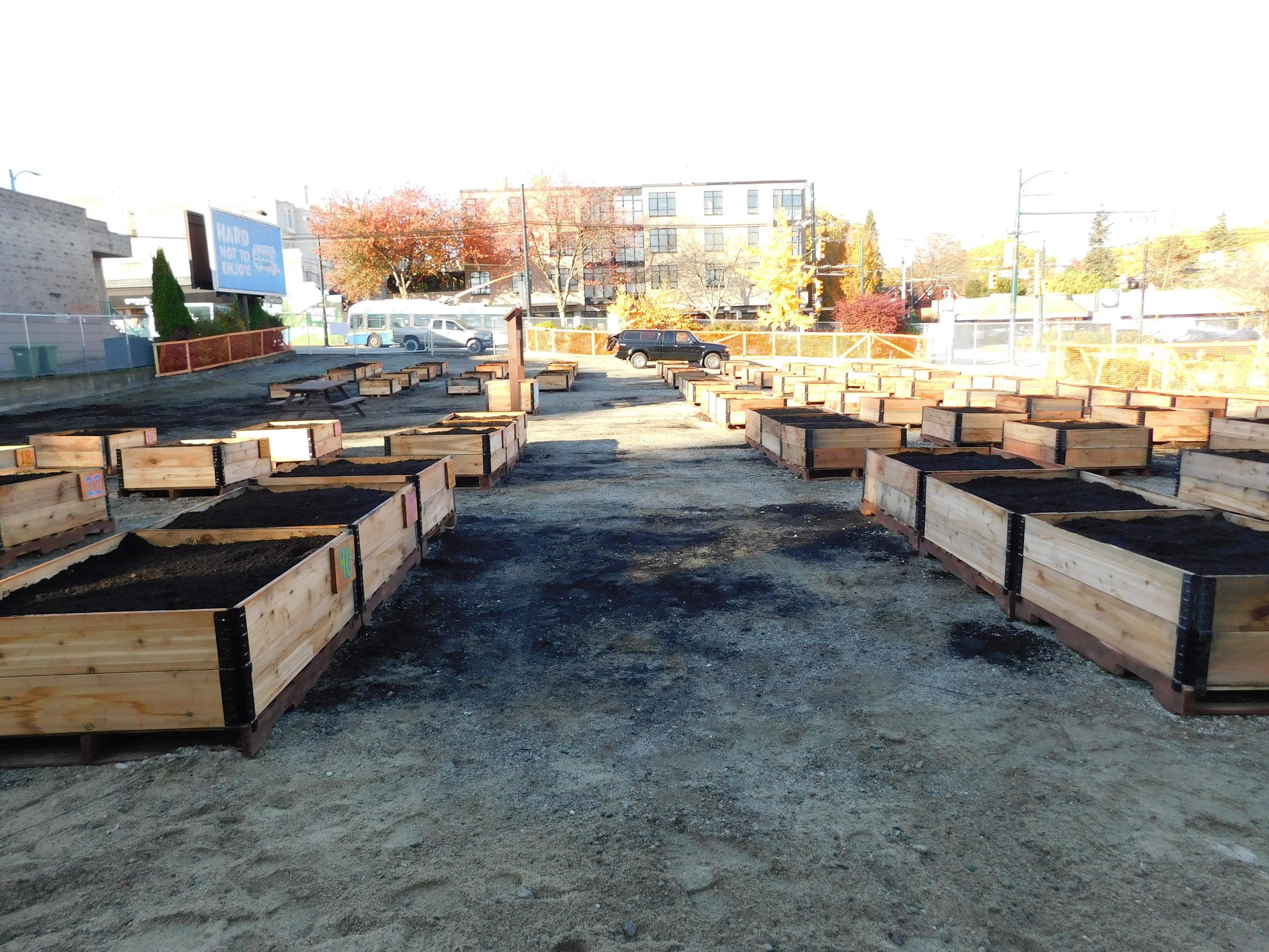Broadway_Alma_Vancouver_Community_Garden_Builders-0006.JPG