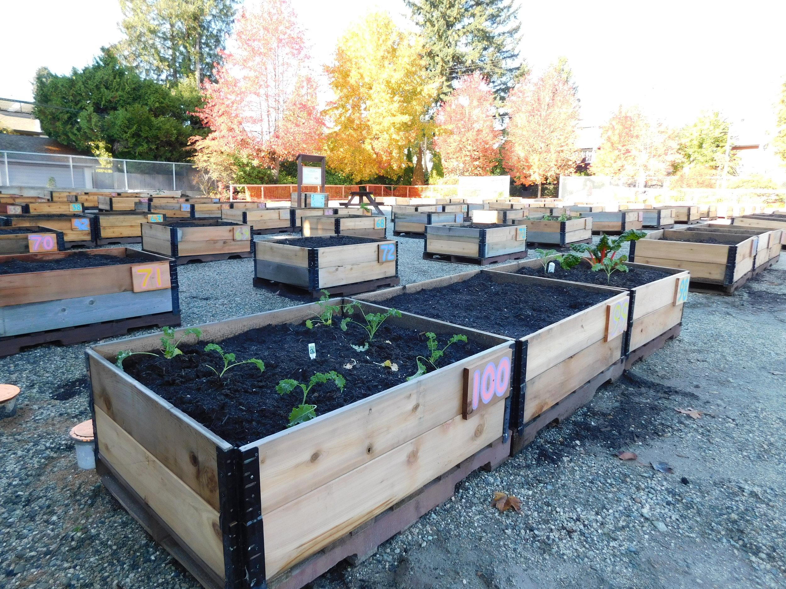Dunbar_40th_Vancouver_Community_Garden_Builders-0008.JPG