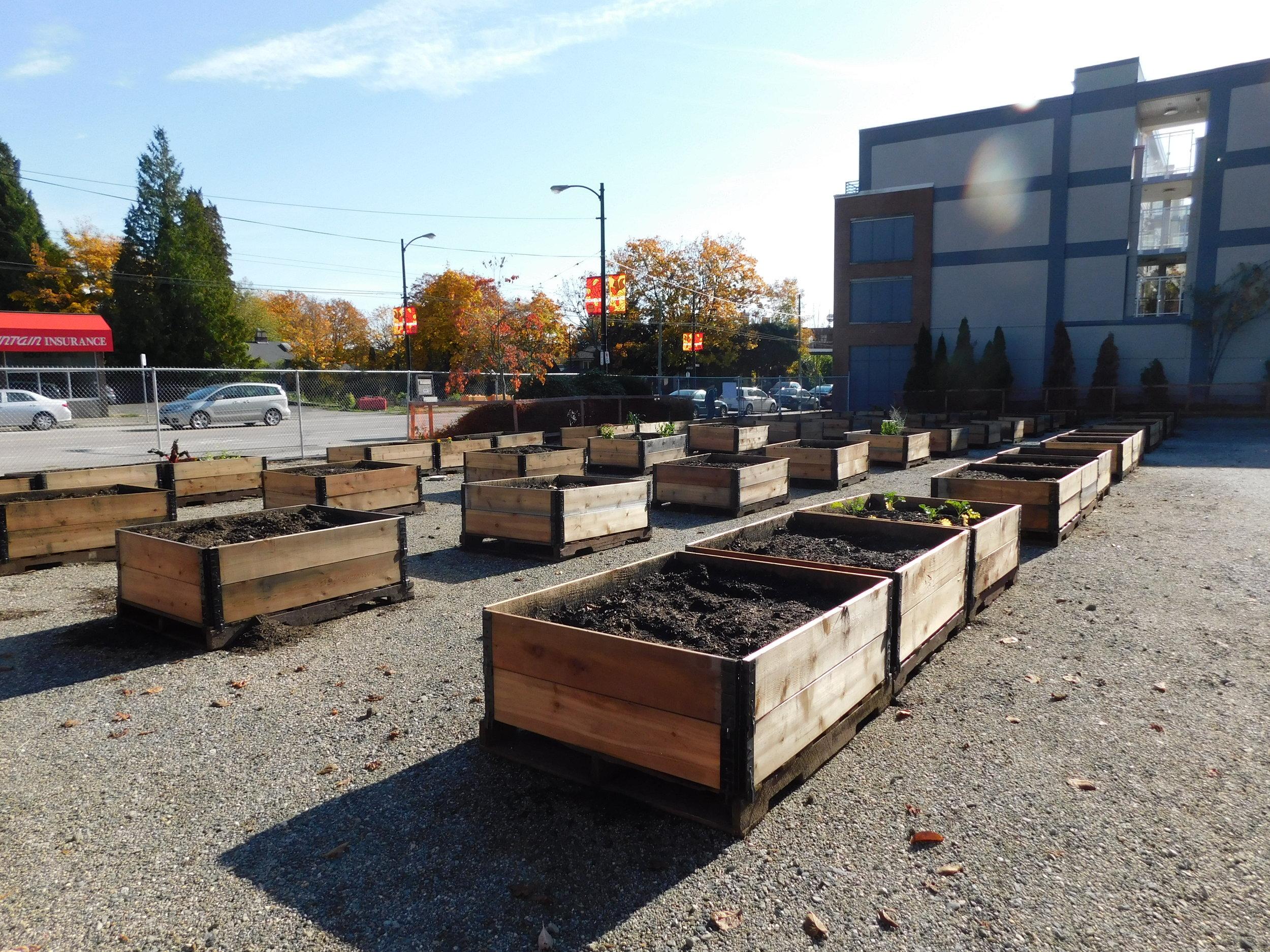 Dunbar_40th_Vancouver_Community_Garden_Builders-0014.JPG