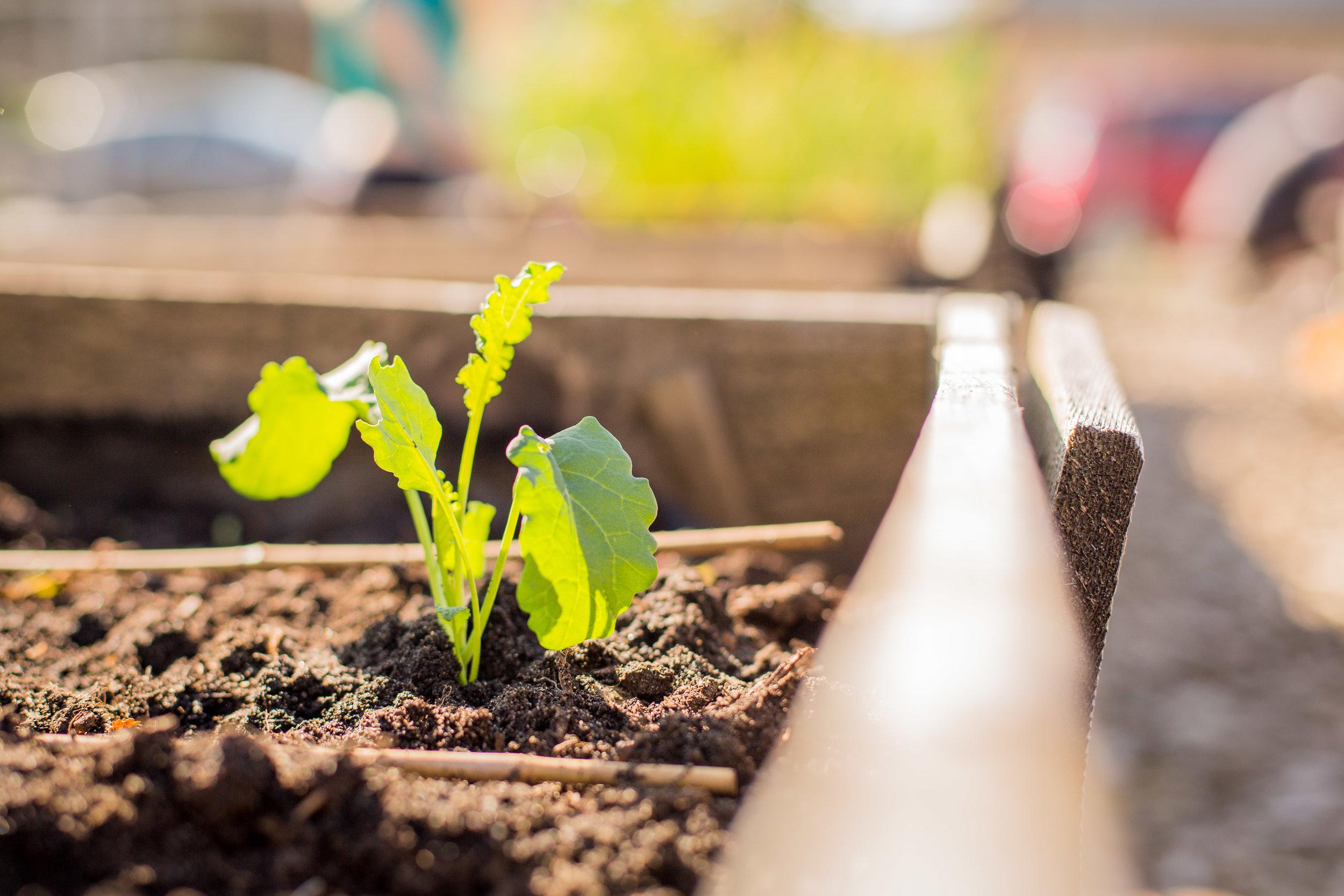 Raised_Garden_Bed_The_Drive_Temporary_Community_Garden_04.2016_Shifting_Growth_026.jpg