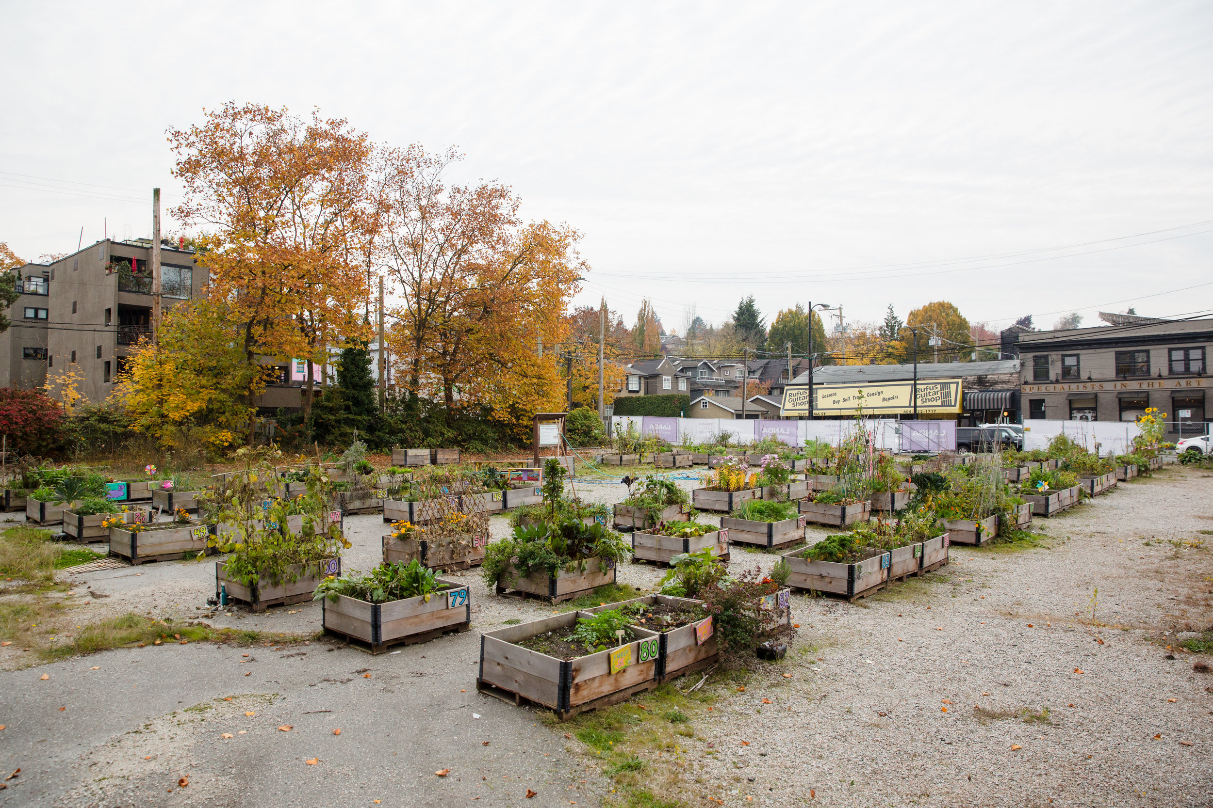 Alma_10th_temporary_community_garden_vancouver