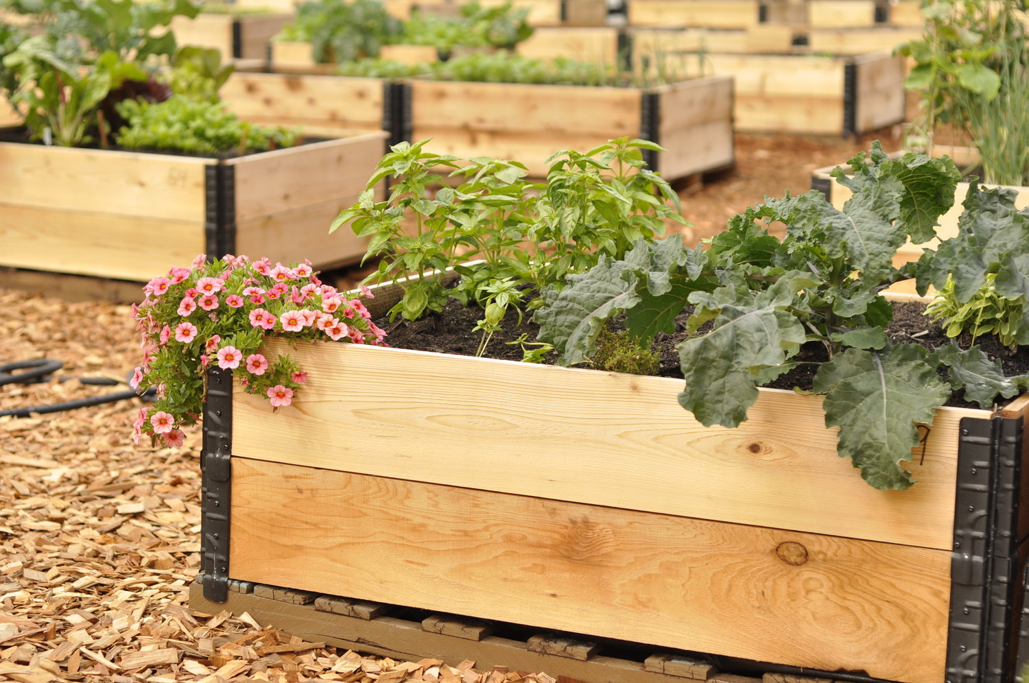 Community_Garden_Builders_Pallet_Raised_Garden_Bed_4x4.jpeg