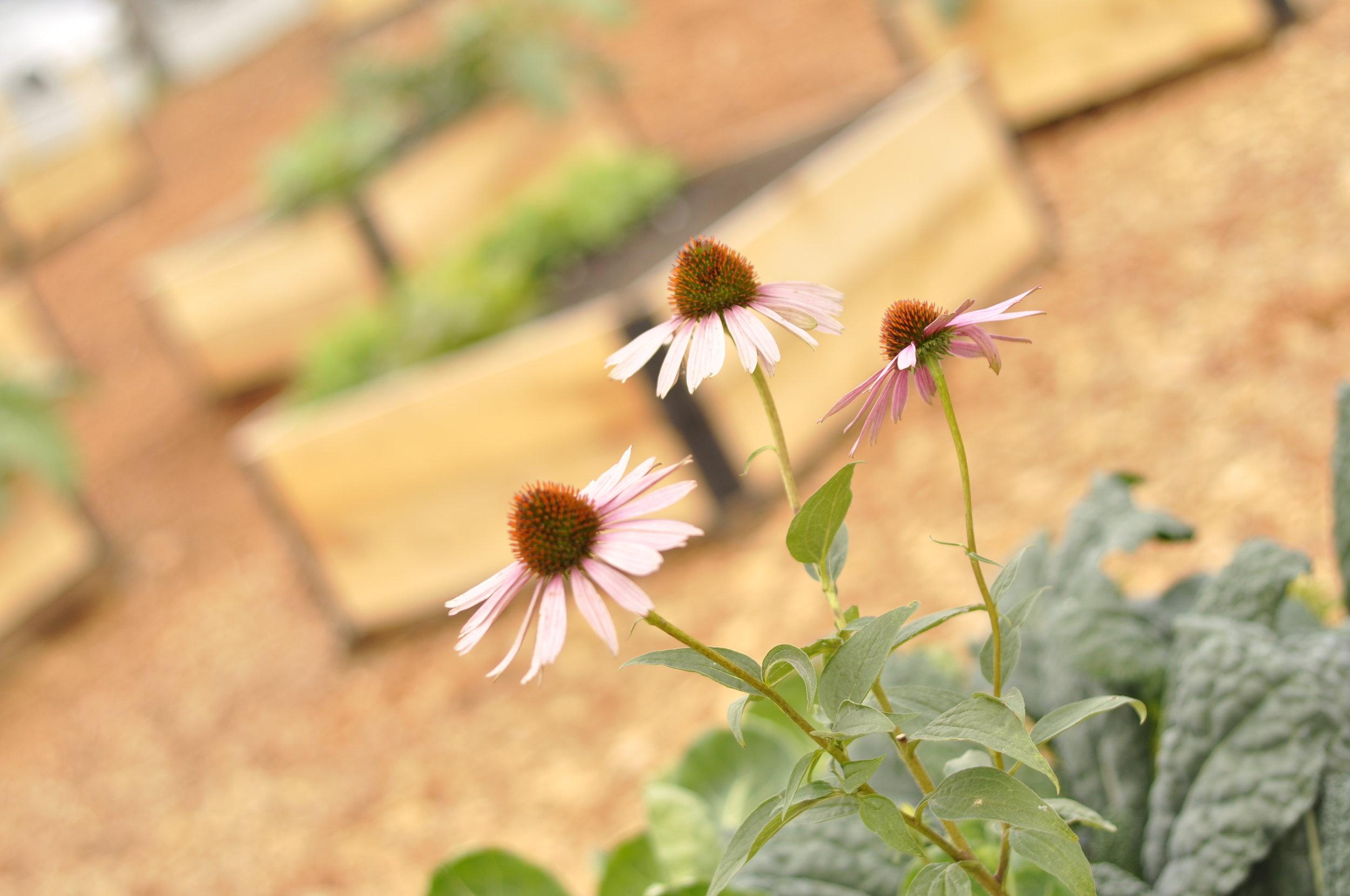 Raised_Garden Beds_Community_Garden_BUilders