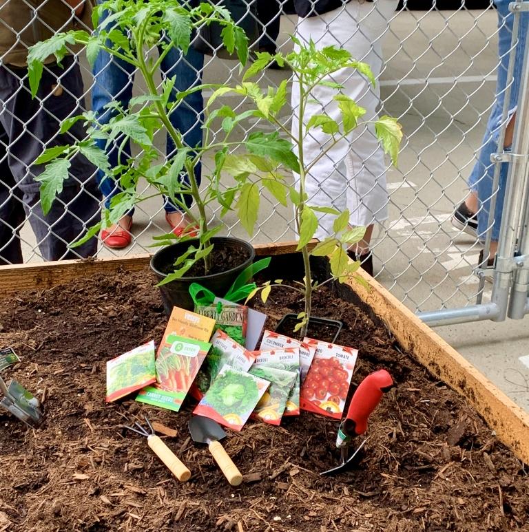 SFU Central City Learning Garden - 2.jpg