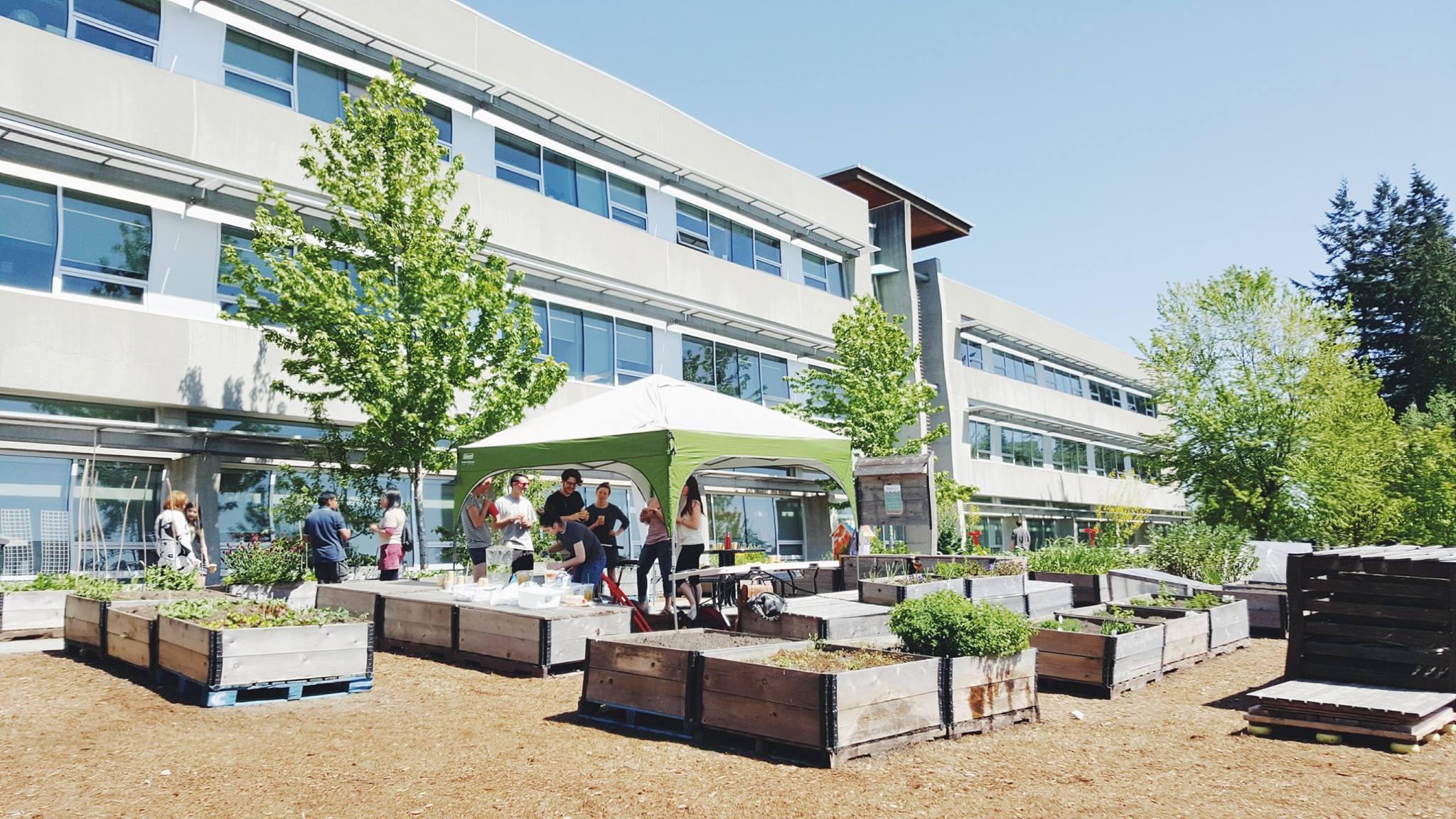 SFU Burnaby Learning Garden Moved -6.jpg
