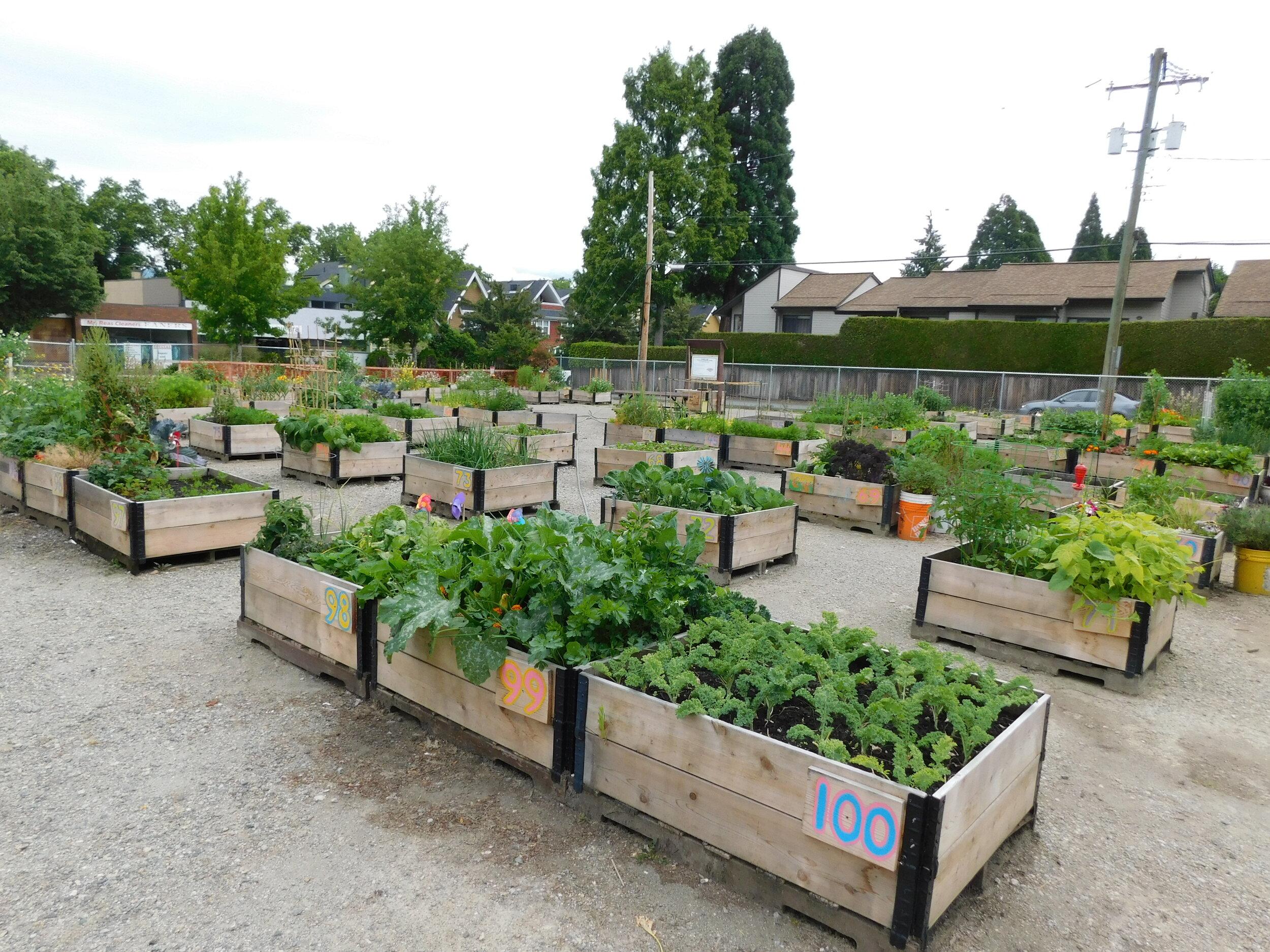 Picture of: Raised Garden Beds Community Garden Builders