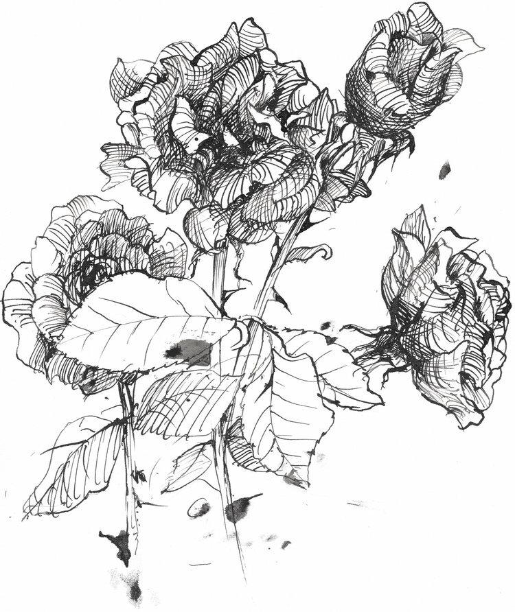 rose+cluster.jpg