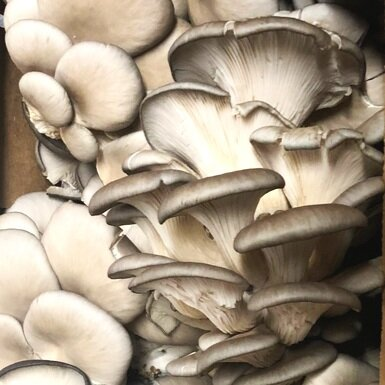 oyster+mushrooms.jpg