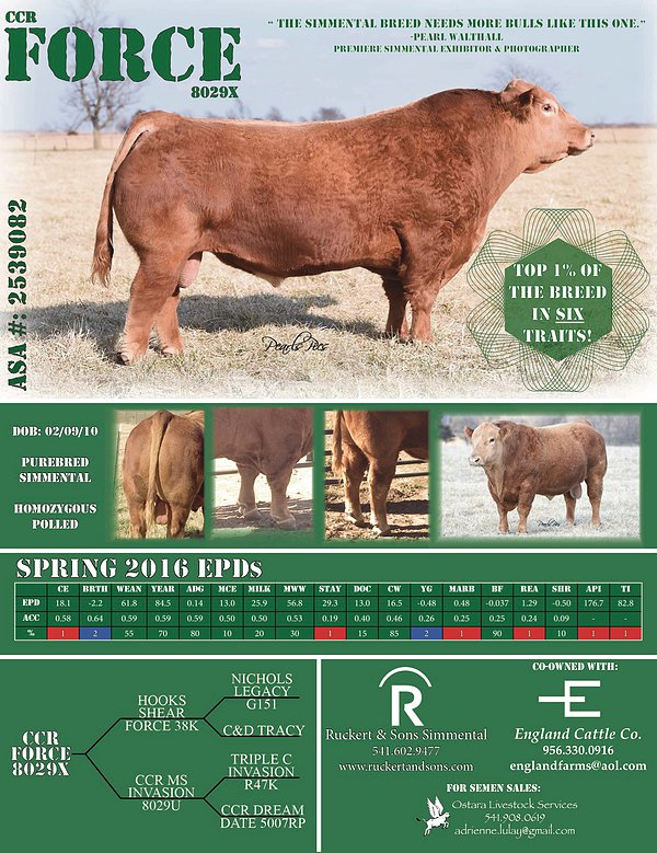 Reference Sire-CCR Force - Semen available