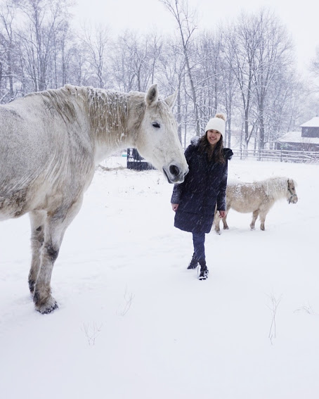white horse and mini horse in the snow