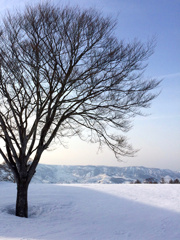 nagano-snow