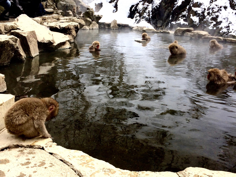 snow-monkeys-jigokudani