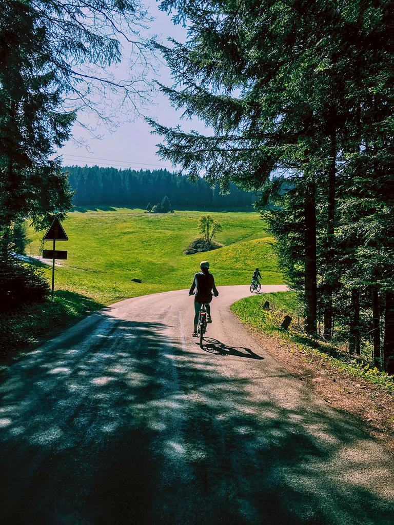 switzerland-herz-route-forest