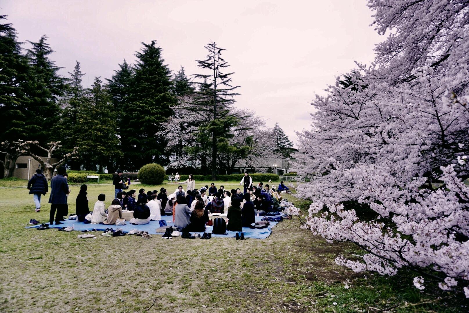 hanami-picnic-kinuta-park-tokyo