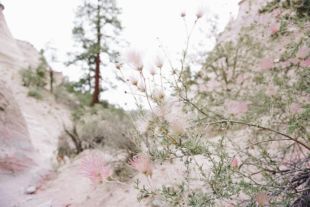 Kasha Katuwe trail spring wildflowers