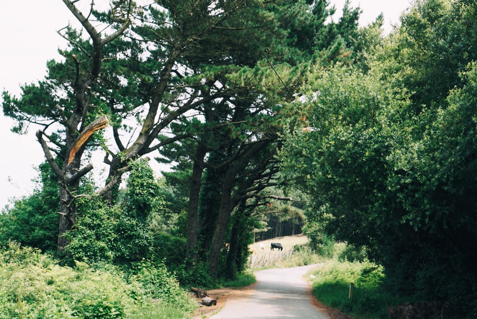 San Sebastian Pasajes hike trail