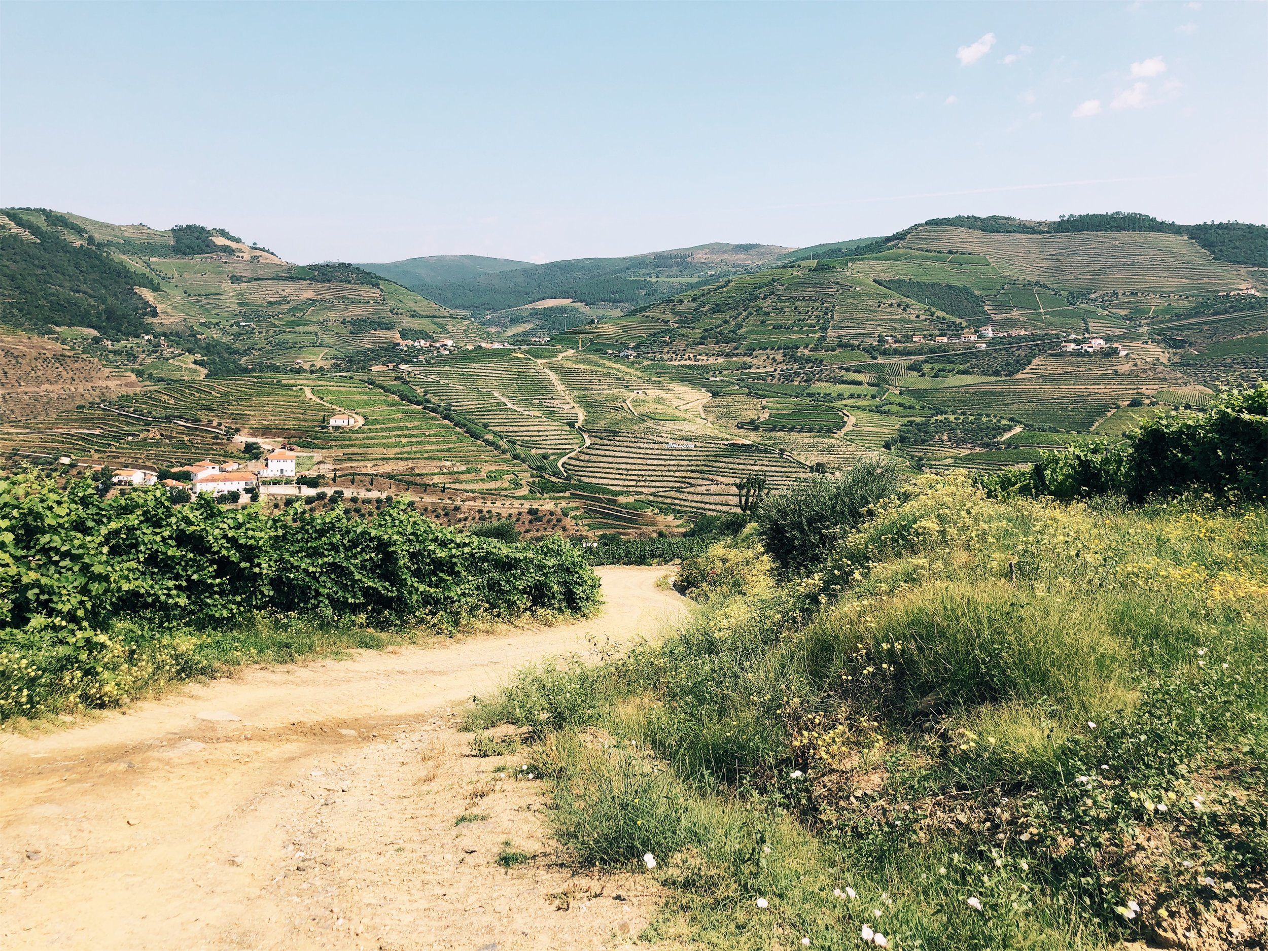 Quinta do Pego morning hike in the Douro Valley vineyards