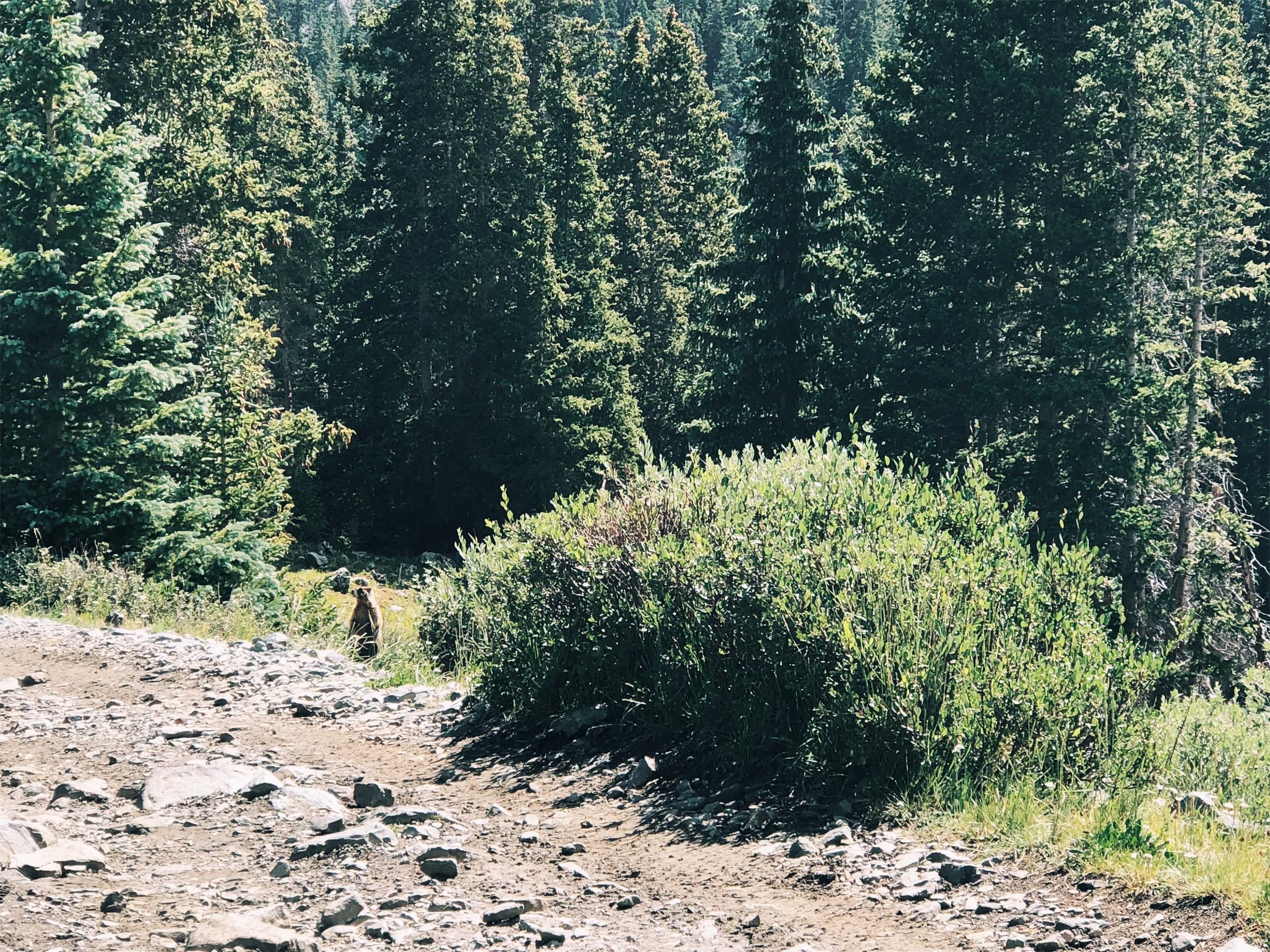 My most exciting wildlife spotting of the day: MARMOT!