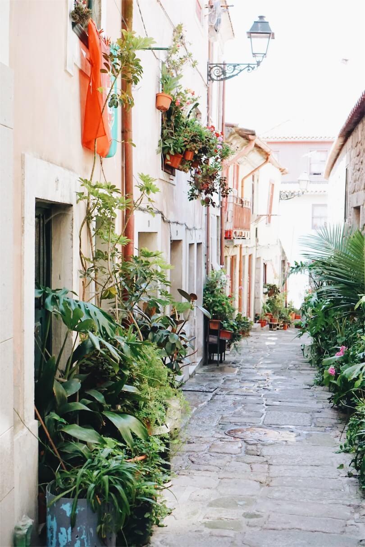 street plants in Porto