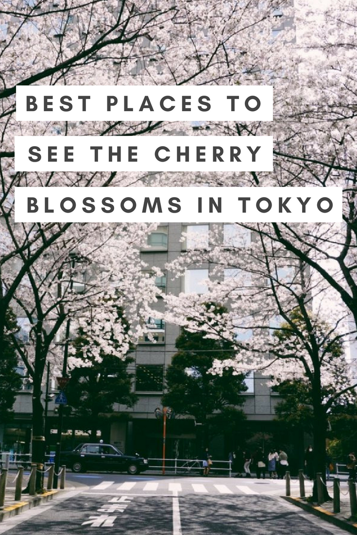 Best Places to See Cherry Blossoms Pin