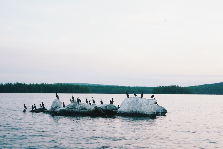 island of loons on Squam Lake