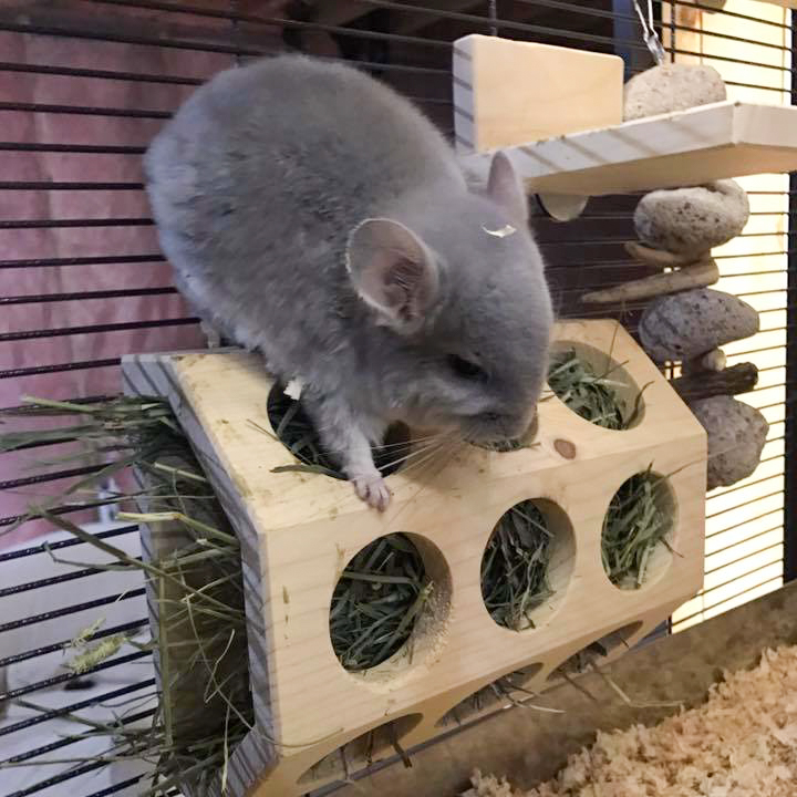 Blueberry exploring her Semi-Octagonal Hay Feeder.