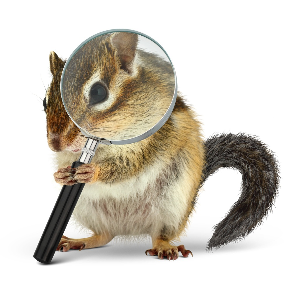 iStock-Purchased+Squirrel+655904832.jpg
