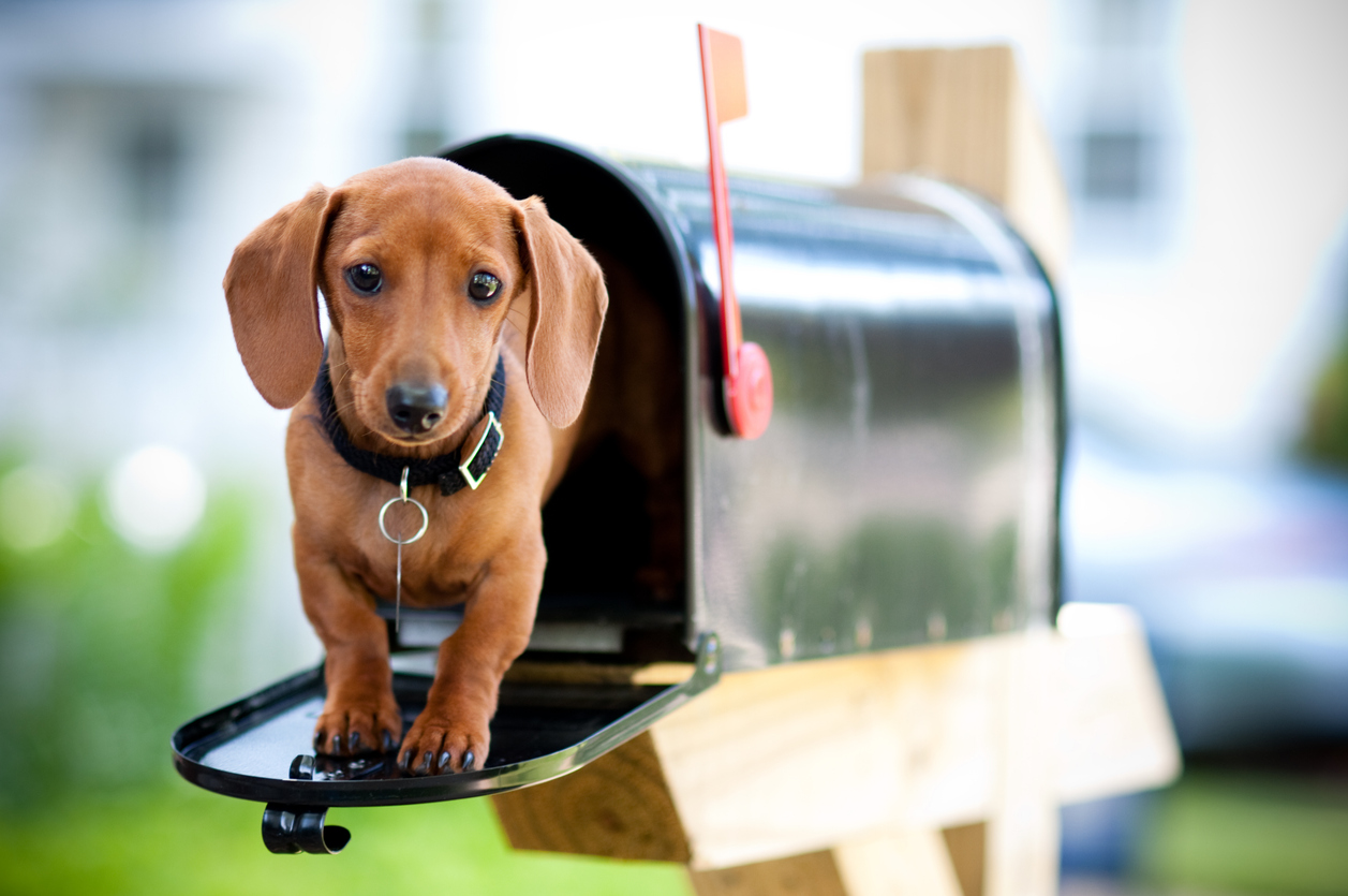 iStock-Purchased Puppy in Mailbox 173950403.jpg
