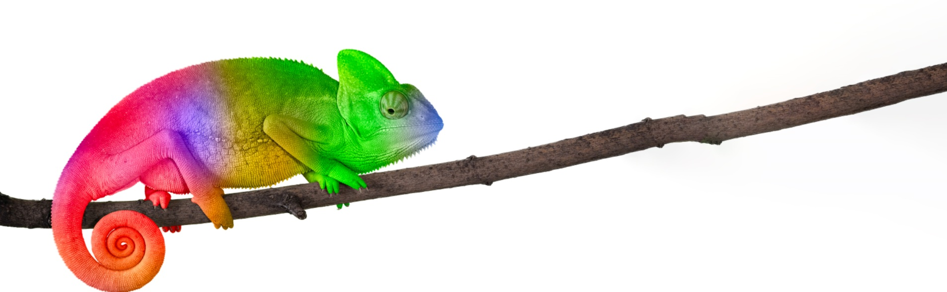 Cameleon+extended+branch+cropped.jpg