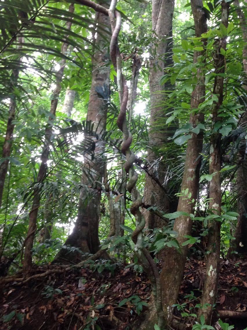 Along Makiling Trail