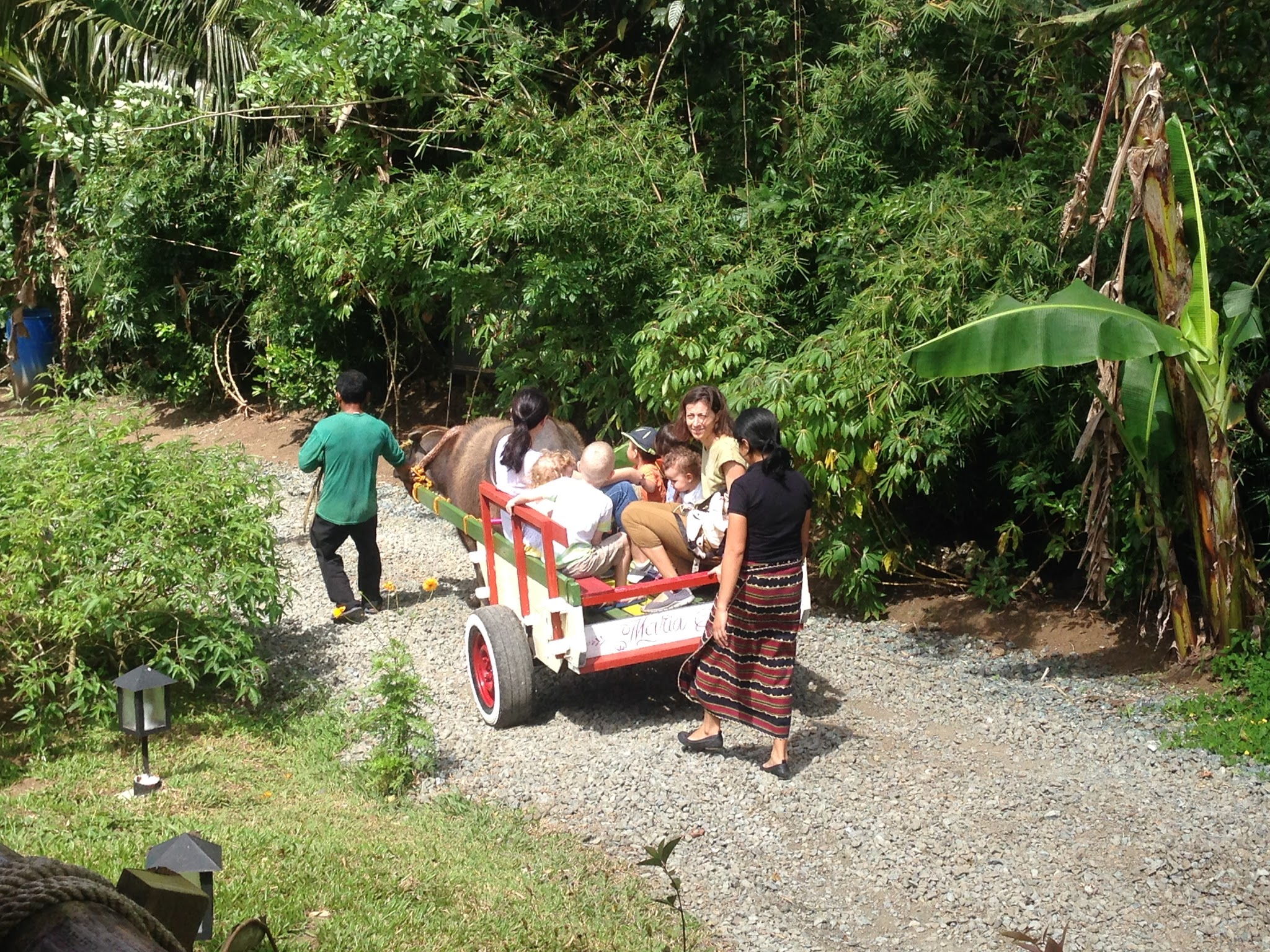 Carabao cart rides