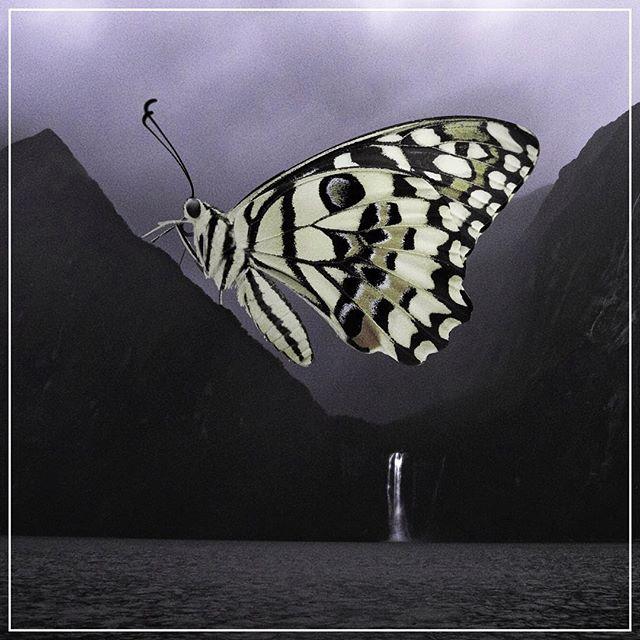 Butterflies are criminally under-represented in emojis. 🦋🗻 #ghostcoast . . . . . . #aesthetic #vaporwave #retrowave #laartist #editor #80s #femaleartist #digitalcollage #collage  #graphicart #newwave #surrealism #render #fantasy #unsplash #madewithunsplash #creepy #butterfly #adobe #80sart #retro #surreal #behemoth #fantasticbeasts #womeninfilm #vaporwaveaesthetic #newzealand #goth #dreamscape