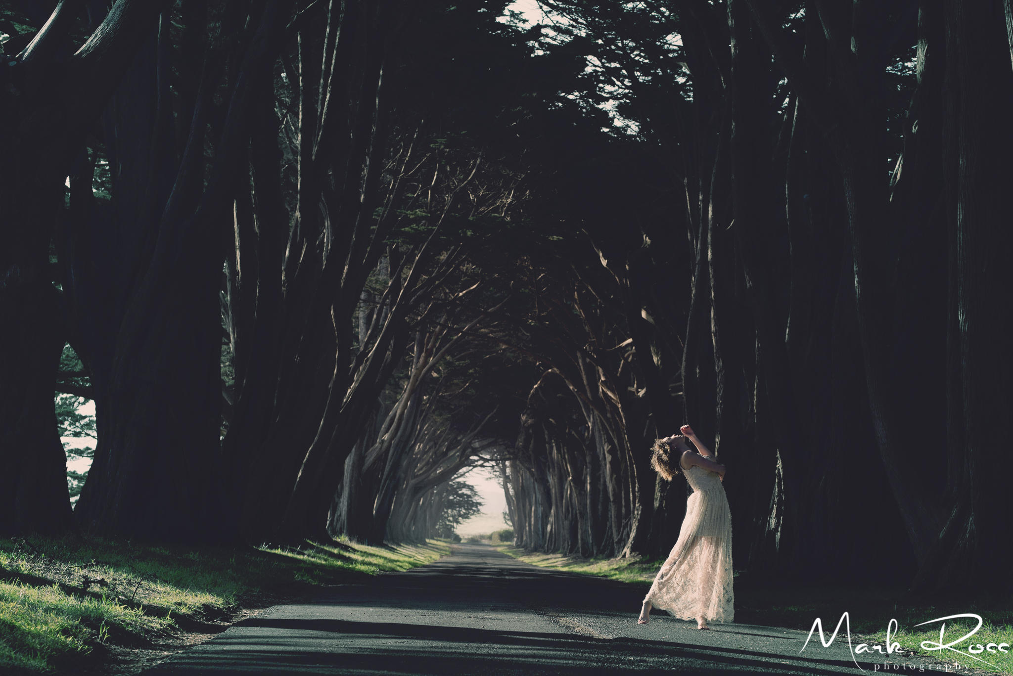 The Cypress Tree tunnel earlier this year...also magical.