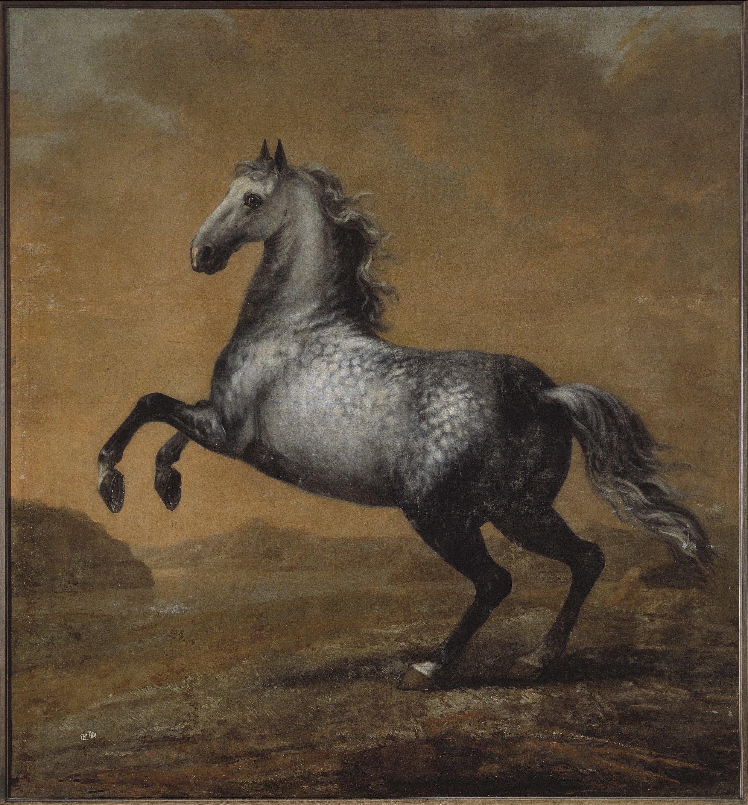 David Klöcker Ehrenstrahl,  Karl XIs livhäst Den Lille Engländaren, 1680-1689, Nationalmuseum