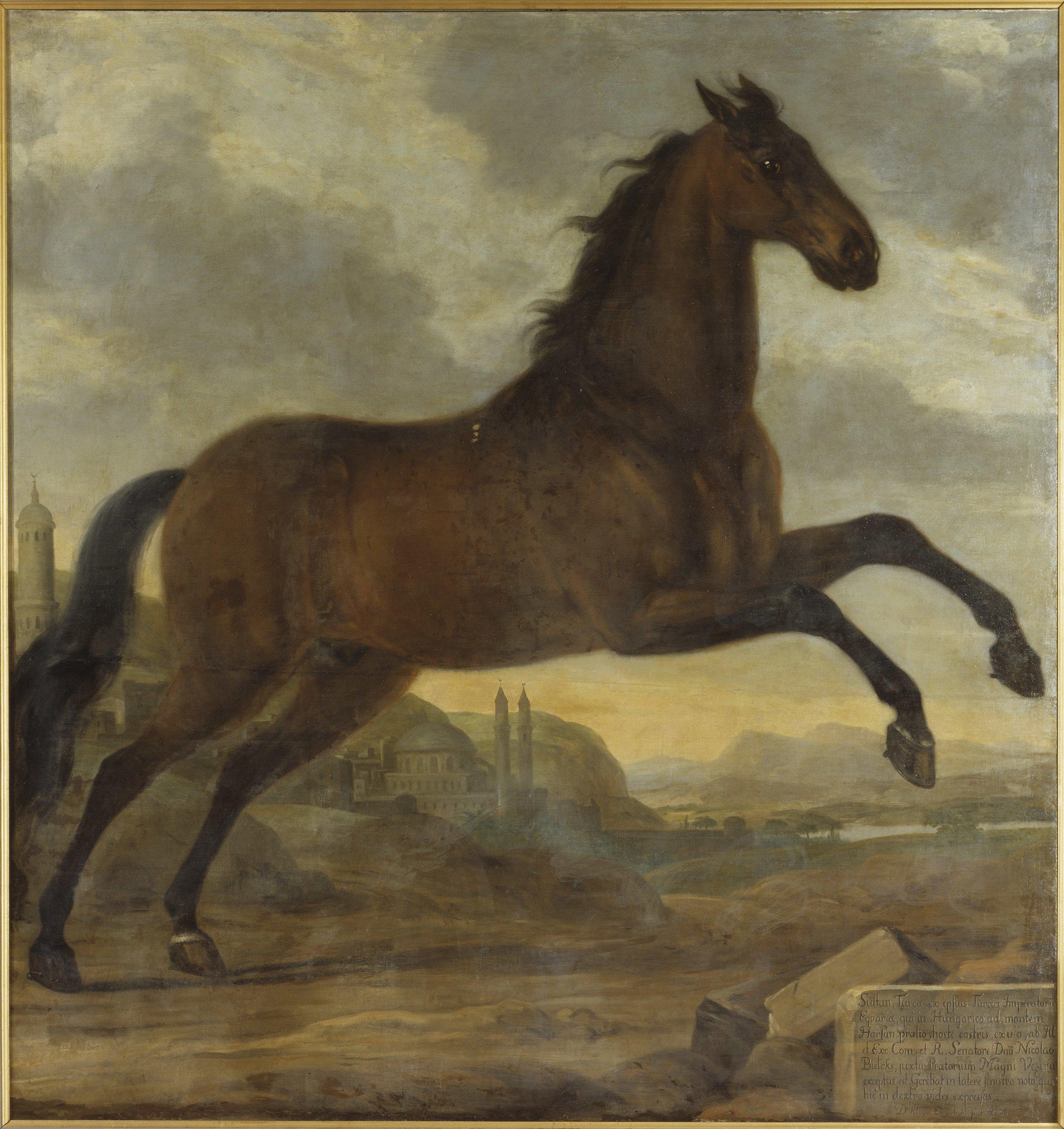 David Klöcker Ehrenstrahl,  Karl XIs livhäst Sultan, 1689, Nationalmuseum
