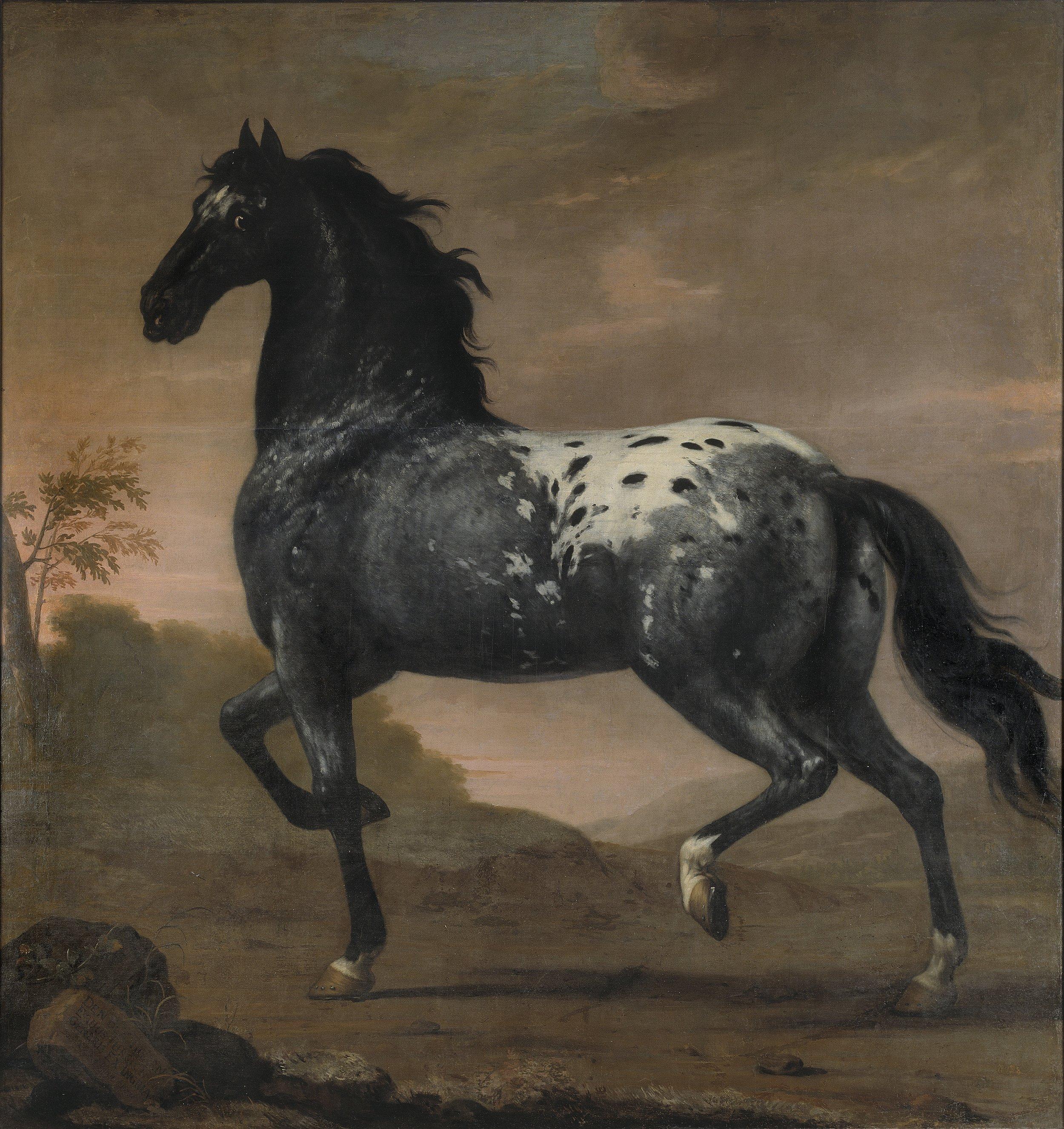 David Klöcker Ehrenstrahl, Karl XIs livhäst Blå Tigern, 1673, Nationalmuseum