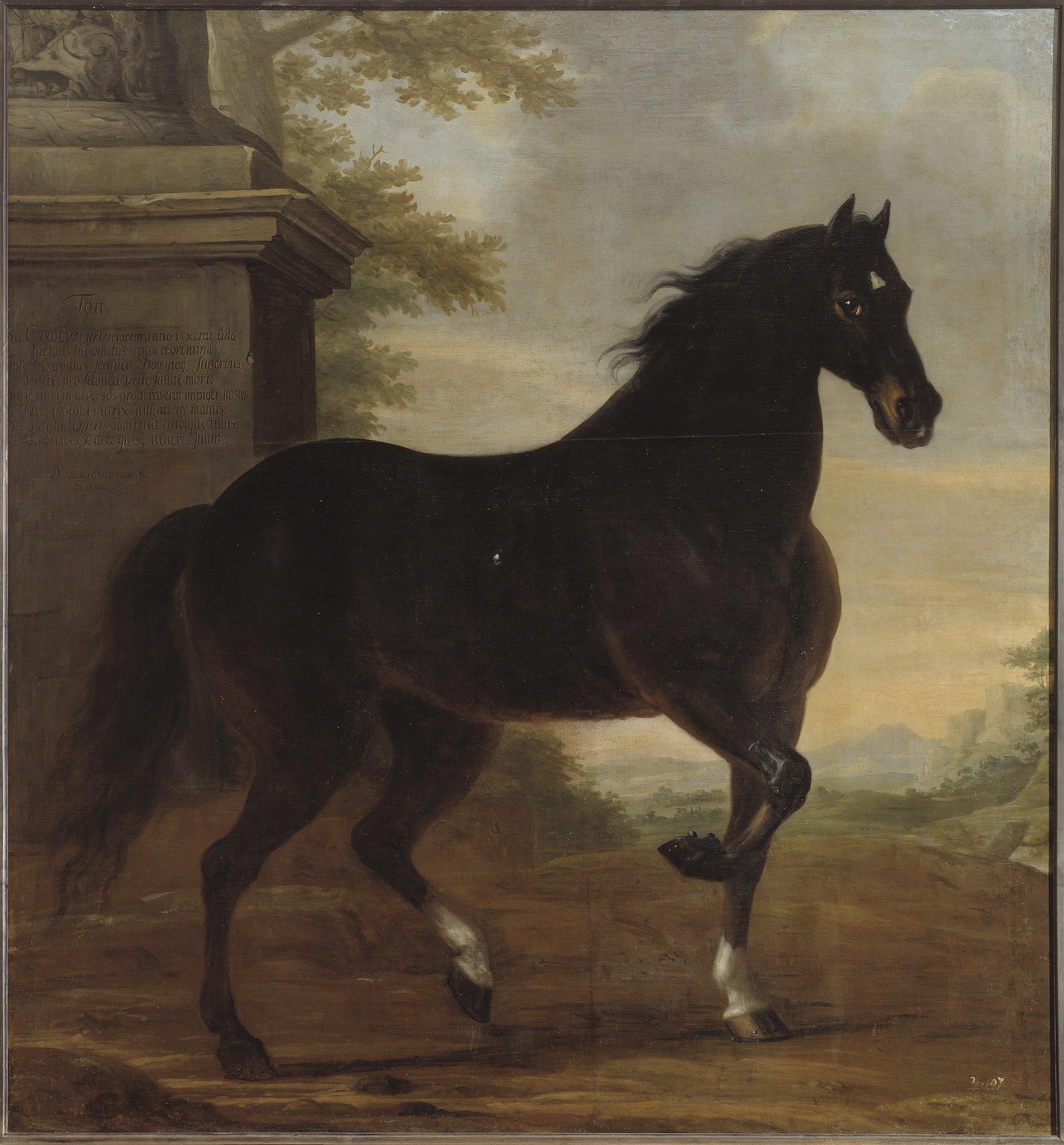 David Klöcker Ehrenstrahl, Karl XIs livhäst Tott, 1680, Nationalmuseum