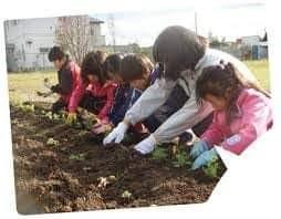 Ученици се учат как да отглеждат растения   Източник