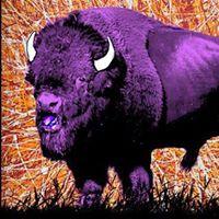 the purple buffalo -