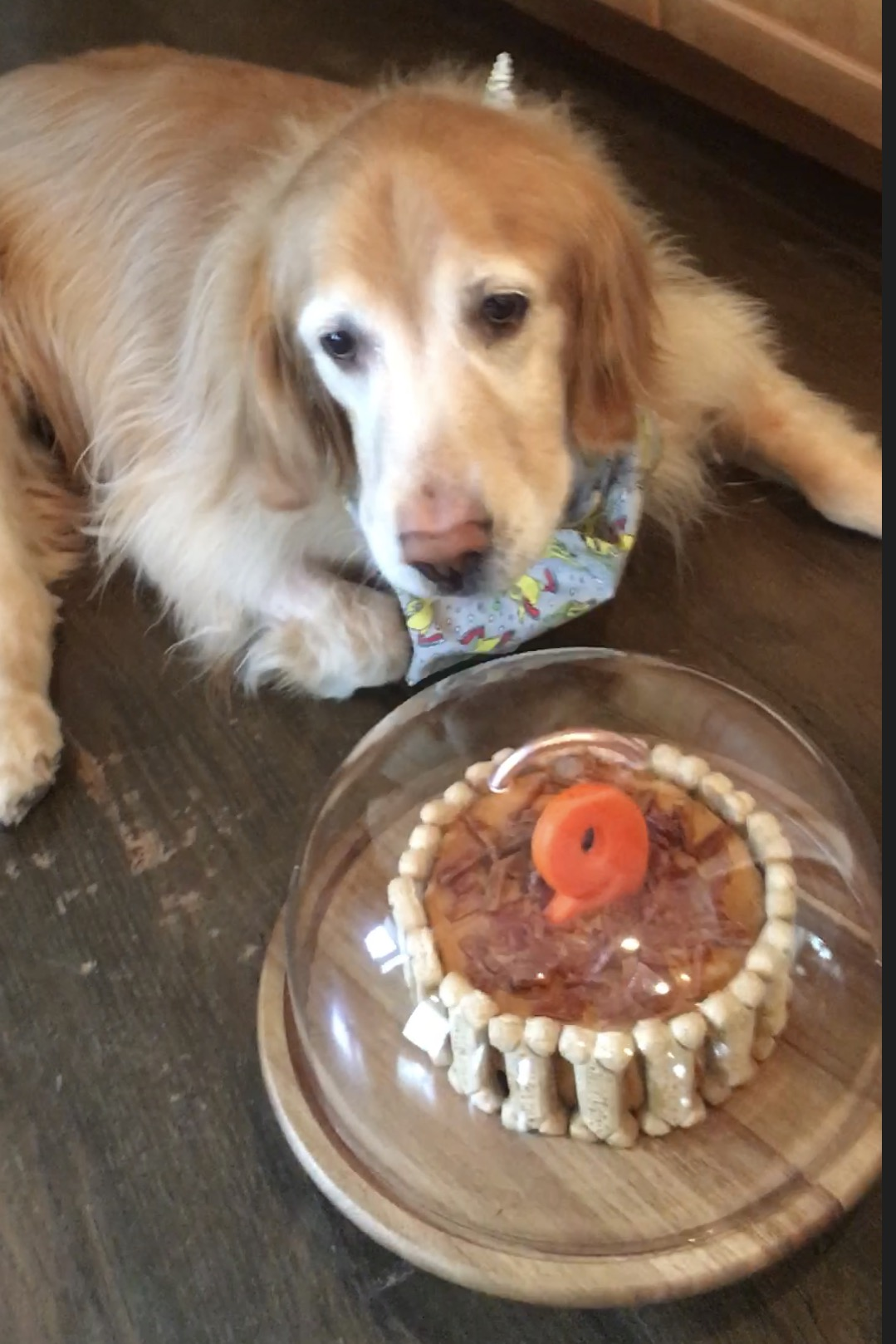 cubbie and the cake.jpg