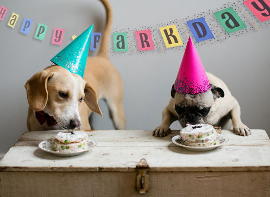 FOR CANINES - Our 4 legged BFF's need to have their cake and eat it too.
