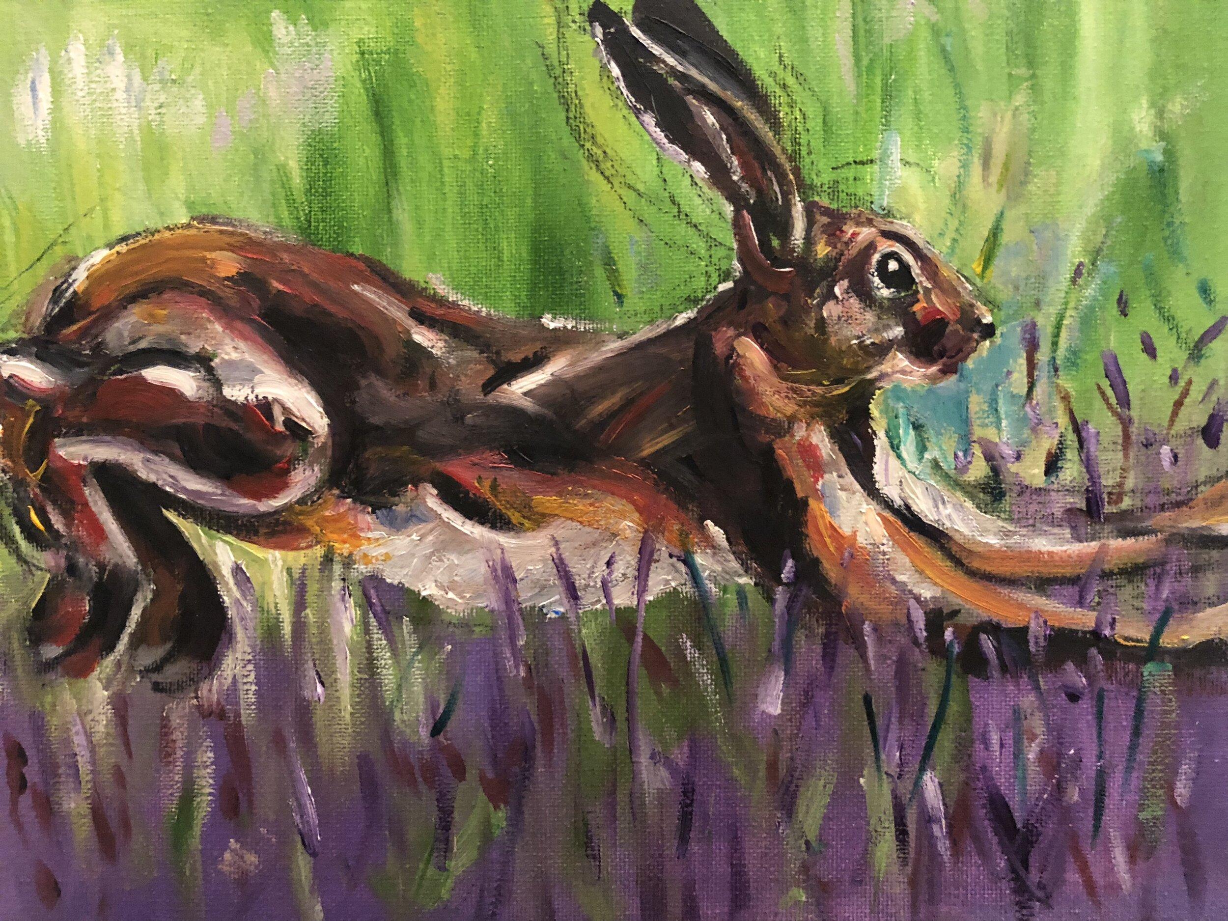 Lavender Hare