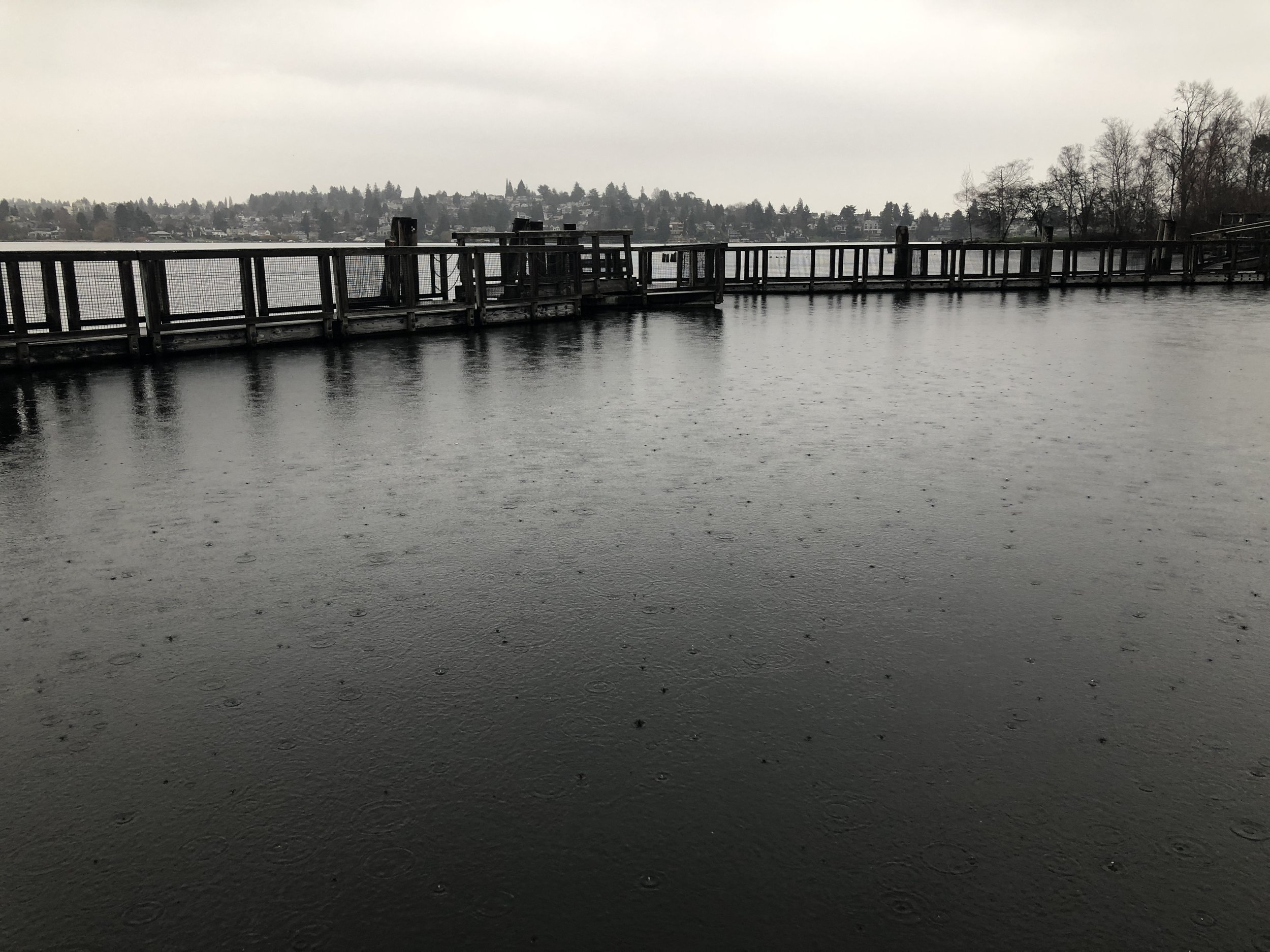 Very cool floating pathway that wiggles across water and scraggly bits of exposed land from Foster Point to East Montlake, Seattle.